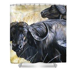 Da206 Cape Buffalo By Daniel Adams Shower Curtain
