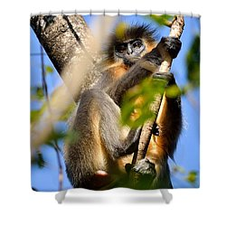 Capped Langur Shower Curtain by Fotosas Photography