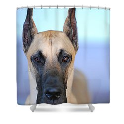 Cappy Shower Curtain by Lisa Phillips