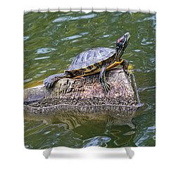 Shower Curtain featuring the photograph Captain Turtle by Kate Brown