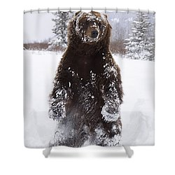 Captive Grizzly Stands On Hind Feet Shower Curtain by Doug Lindstrand