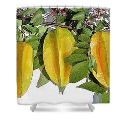 Carambolas Starfruit Three Up Shower Curtain by Olivia Novak