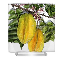Carambolas Starfruit Two Up Shower Curtain by Olivia Novak