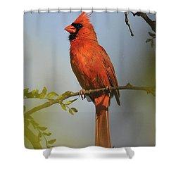 Cardinal 329 Shower Curtain