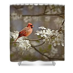 Cardinal And Blossoms Shower Curtain