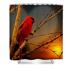 Cardinal At Sunset Valentine Shower Curtain