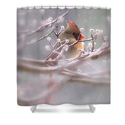 Cardinal - Bird - Lady In The Rain Shower Curtain by Travis Truelove