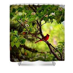 Cardinal In Dogwood Shower Curtain by Tara Potts