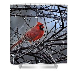Cardinal In The Rain   Shower Curtain