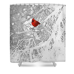 Cardinal In Winter Shower Curtain by Ellen Henneke
