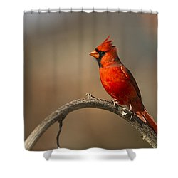 Shower Curtain featuring the photograph Cardinal by Jerry Gammon