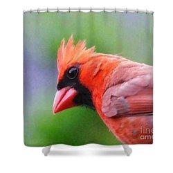 Cardinal Shower Curtain by Lizi Beard-Ward