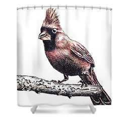 Cardinal Male Shower Curtain by Katharina Filus