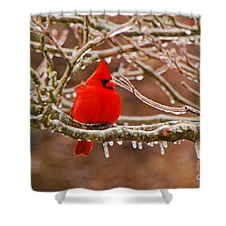 Cardinal Shower Curtain by Mary Carol Story