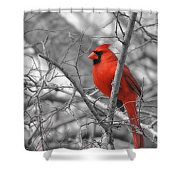 Cardinal Of Hope 002sc Shower Curtain by Robert ONeil
