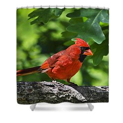 Cardinal Red Shower Curtain by Christina Rollo