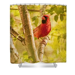 Cardinal Rules Shower Curtain by Lois Bryan