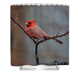 Cardinal Sing Shower Curtain