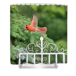Shower Curtain featuring the photograph Cardinal Time To Soar by Thomas Woolworth