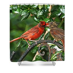 Cardinal Bird Valentines Love  Shower Curtain