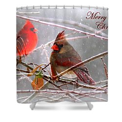 Cardinals - Male And Female - Img_003card Shower Curtain by Travis Truelove