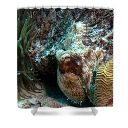 Caribbean Reef Octopus Next To Green Anemone Shower Curtain