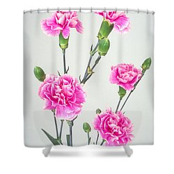 Carnartons Shower Curtain