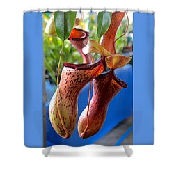 Carnivorous Pitcher Plants Shower Curtain by Venetia Featherstone-Witty