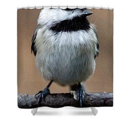 Shower Curtain featuring the painting Carolina Chickadee by John Haldane