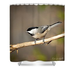 Shower Curtain featuring the photograph Carolina Chickadee  by Kerri Farley