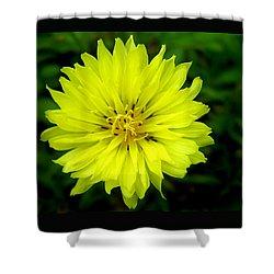 Wild Carolina Desert Chicory Shower Curtain by William Tanneberger