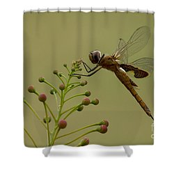 Carolina Saddlebags Shower Curtain