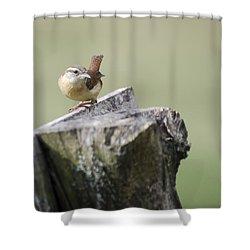 Carolina Wren Shower Curtain by Heather Applegate