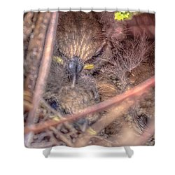 Shower Curtain featuring the photograph Carolina Wren Nest by Rob Sellers