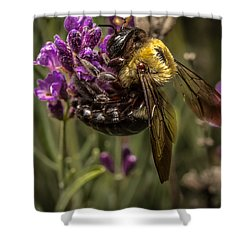 Carpenter Bee On A Lavender Spike Shower Curtain by Ron Pate