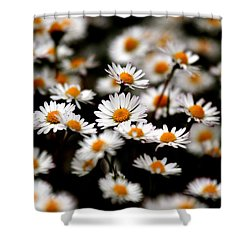 Carpet Of Daisies Shower Curtain
