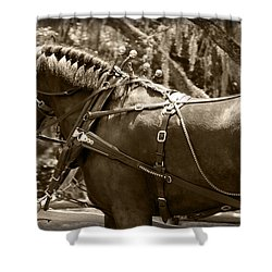 Carriage Horse Shower Curtain