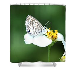 Shower Curtain featuring the photograph Cassius Blue On Wildflower by Greg Allore