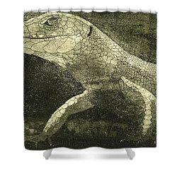 casual meeting Reptile Viviparous Lizard  Lacerta vivipara Shower Curtain