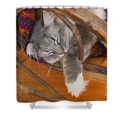 Cat Asleep In A Wooden Rocking Chair Shower Curtain by Louise Heusinkveld