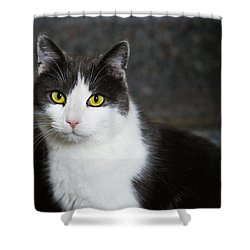 Cat Black And White With Green And Yellow Eyes Shower Curtain by Matthias Hauser
