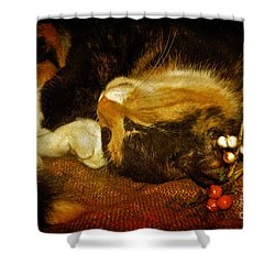 Cat Catnapping Shower Curtain by Lois Bryan
