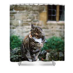 Cat In England Shower Curtain by James L. Amos