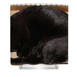 Shower Curtain featuring the photograph Cat In The Box by Kerri Mortenson