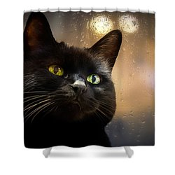 Cat In The Window Shower Curtain by Bob Orsillo