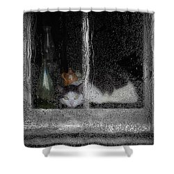 Cat In The Window Shower Curtain by Jack Zulli