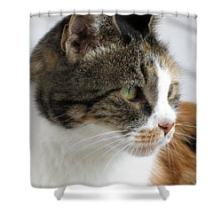 Cat Shower Curtain by Laurel Powell