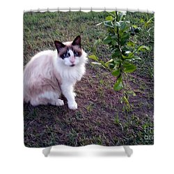 Shower Curtain featuring the photograph Cat 'n Orange Tree by Joseph Baril