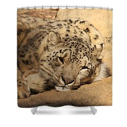 Cat Nap Shower Curtain by Bob and Jan Shriner