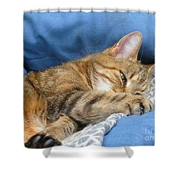Shower Curtain featuring the photograph Cat Nap by Lingfai Leung